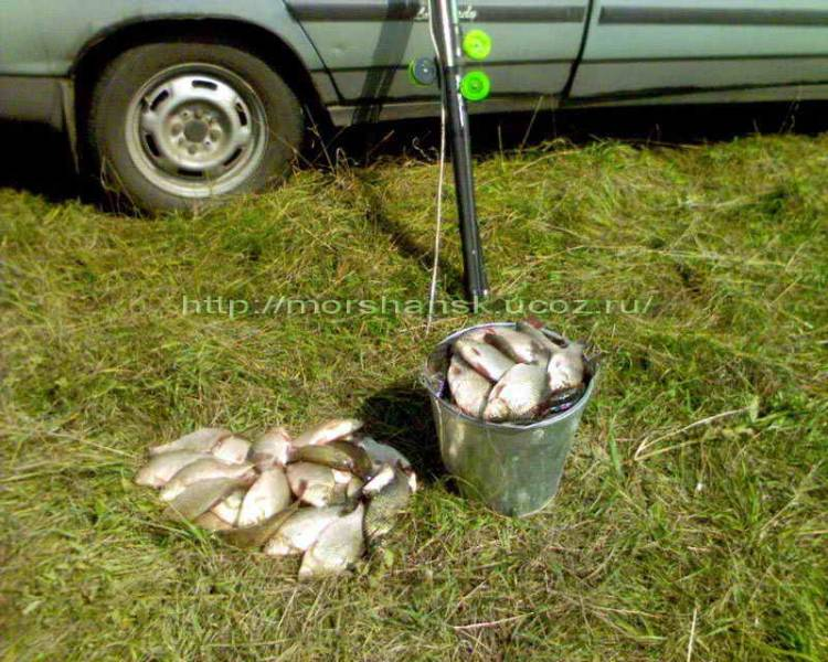 рыбалка в моршанском районе на цне